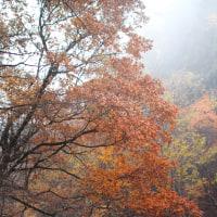 12月5日  晩秋の朝霧湧く