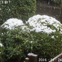 11月の初雪、なんと54年ぶり。