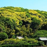 『初夏の色』 金龍寺