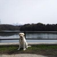 大山とわさび~岡成池~