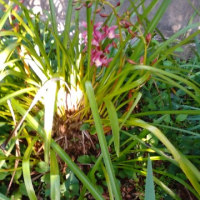 4月22日の花