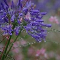 梅雨のサンクガーデン