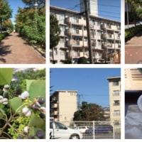 散歩をしながら花の種を見て、一休みしてアイスコーヒーを飲みます。