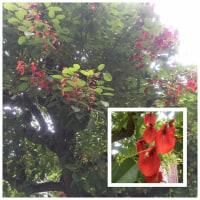 血のような色の花~紀尾井町界隈