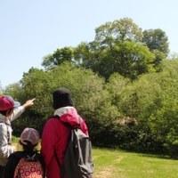 自然楽校 『春のブナ林観察会』開催のお知らせ