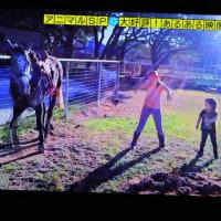 5/26 踊る馬 横の女の子たちが踊りだした そうしたら馬も踊りだした