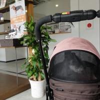 ユーロと一緒に!~定期検診4