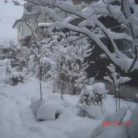やっぱり来たか~・・・大雪
