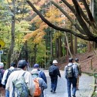 春日山原始林を歩く!・・・奈良 神秘の森