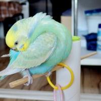 【755】不法侵入鳥?