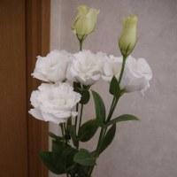 今日の仏花【八重のトルコ桔梗】