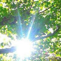 新緑に メジロ白丸アイライン つぶら目けなげ 純粋力みなぎり  〔シンリョクニ メジロシロマルアイライン ツブラメケナゲ ジュンスイリョクミナギリ 〕  真鹿子(まかこ)