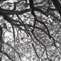 Eternal love of Camellia