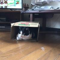 猫がだ~~~い好きな物