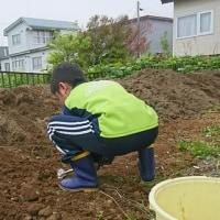 ひっさびさ、畑作り…
