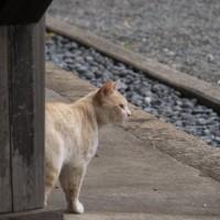 新入り猫さん?