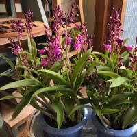華やか!春の早春の花鉢