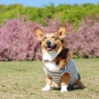 がんばろう日本! 春よ来い。