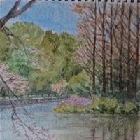 武蔵関公園ー葦の島