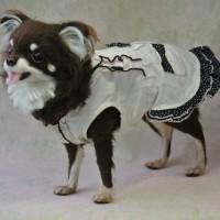 羊毛フェルト チワワのショコラちゃんおうちに帰りましたよ♪
