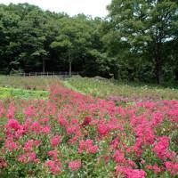 7月の秩父ミューズパーク・美の山公園の散策