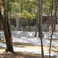 円山方面へ