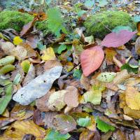 ココロのリフレッシュ-今年も東北の紅葉