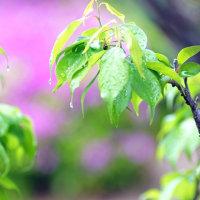 春雨に濡れて、