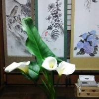 闘病日記5/24(水分)・・・カラーの花