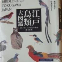 野鳥を食べる