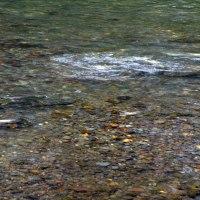 ウヨロ川のサケ(鮭)とフットパス情報 2016/9/18