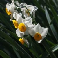 マッキーの『四季を楽しむ』:早春の新宿御苑