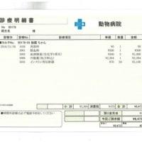 伽羅の肝炎&糖尿病日記(9)
