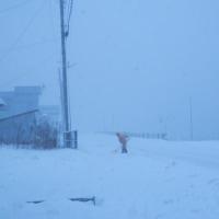 大寒波襲来、朝から吹雪き。