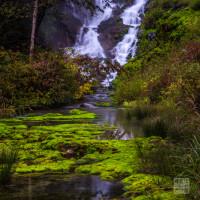 ラムサール条約登録湿地  チャツボミゴケ公園