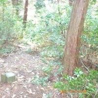 金明山登山(4)  山頂-城跡-展望岩ー下山