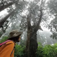 天然杉林ツアーが始まりました!
