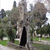 世界遺産「トプカプ宮殿」 (Topkapi Palace)   Istanbul  [ Turkey ]