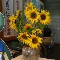女性長寿日本一の沖縄県北中城村の比嘉副議長から、ひまわり🌻🌻の花が届きました。