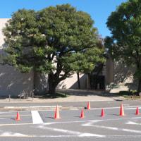 11月の神宮外苑:聖徳記念絵画館と外苑総合グラウンド PART2