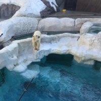 上野動物園 デアさん