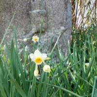率川神社のユリ祭りで行われる奉納内容は?・・(^◇^)