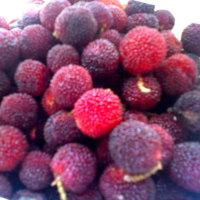 六月の宝石のような果実たち