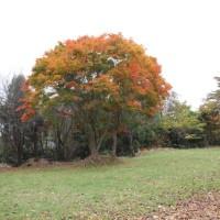 北の里八幡神社/北海道北広島市(Kitanosato Hachiman Jinja,Kitahiroshima,Hokkaido Japan)
