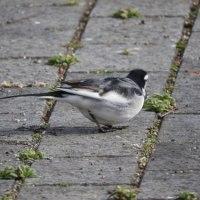 松本平広域公園緑地で見た鳥