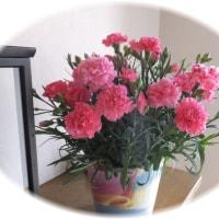 お花の共演