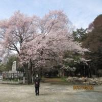 咲きみちてあの世のいろの桜かな  遅足