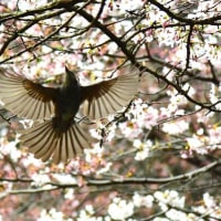 白金自然写真クラブ 2017春 写真展のご案内