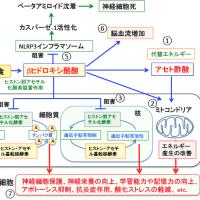 福田医師のケトン食