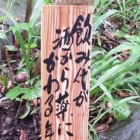 梅雨到来。。東雲での川柳。まさかの追突事故。